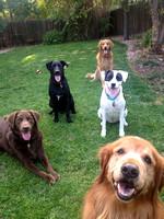 Colorado Puppy Rescue Photos