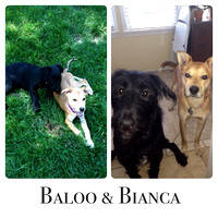 Baloo and Bianca